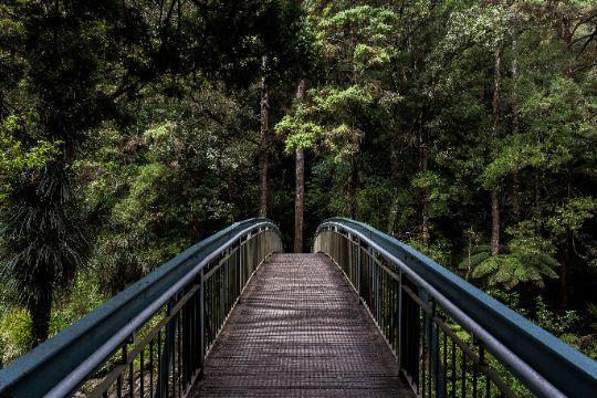 Bridge into jungle